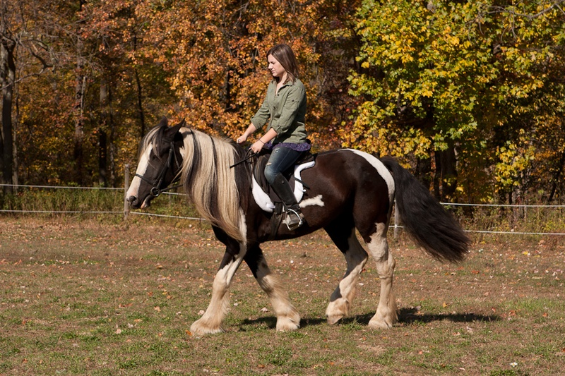 Horizon Stables October 2010